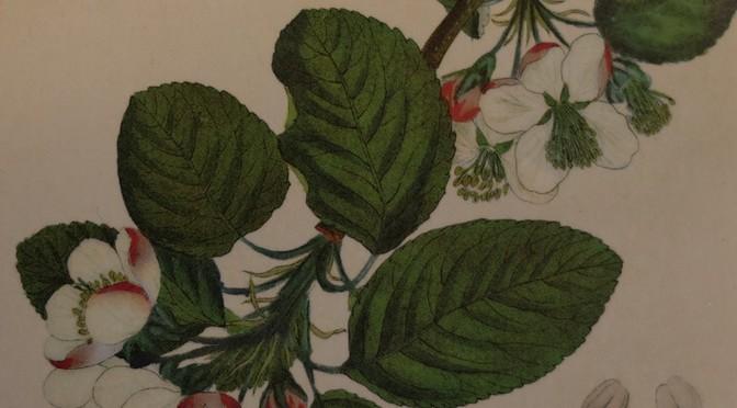 Katharina Hagen – Der Geschmack von Apfelkernen